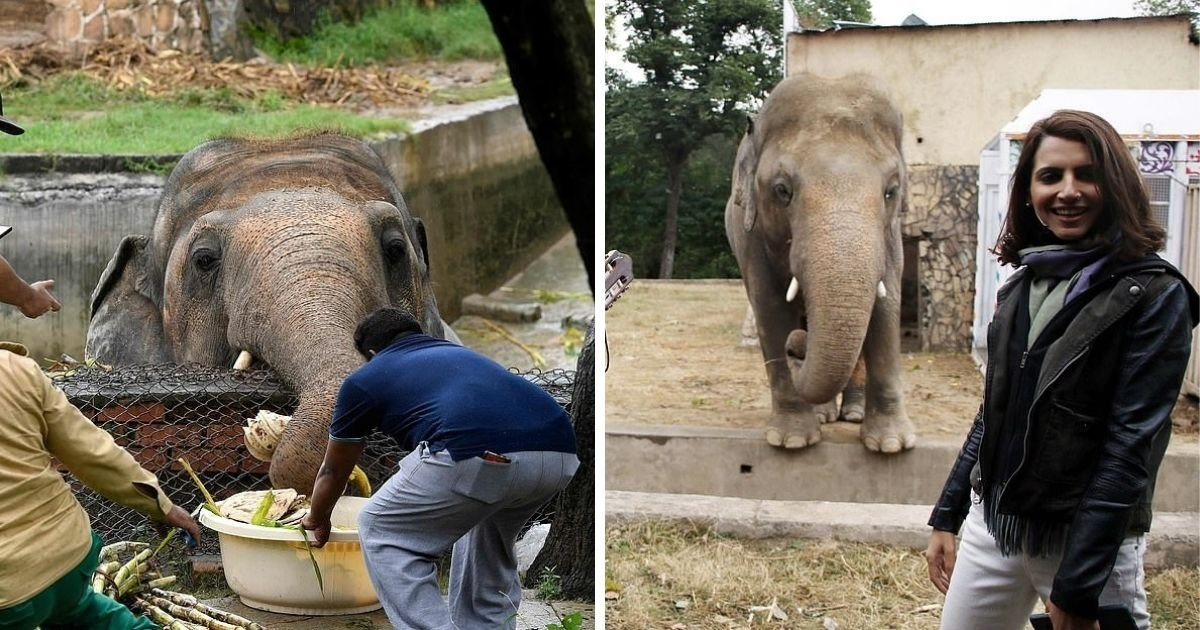 untitled design 6 13.jpg?resize=412,232 - The 'World's Loneliest Elephant' Is Finally Set To Be Freed From Horror Zoo