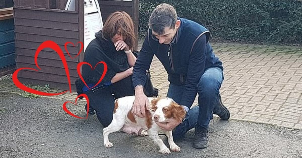 untitled design 7 5.jpg?resize=412,232 - Couple Reunited With Their Dog Six Years After She Was Stolen From Them
