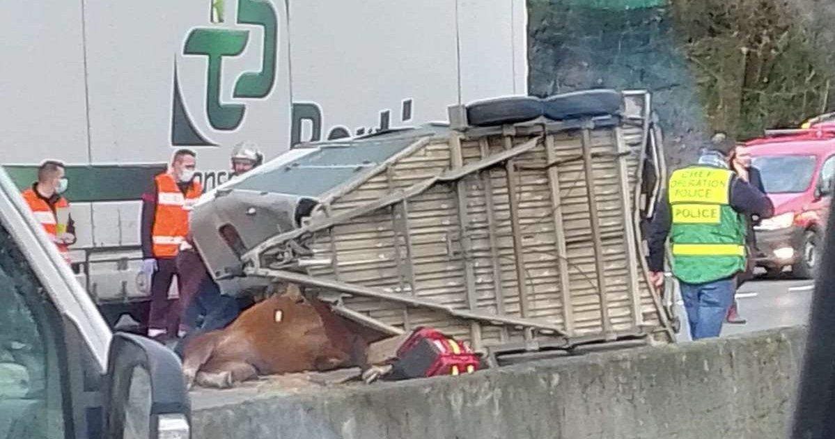 1 acc.jpg?resize=1200,630 - Bordeaux: un accident sur la rocade a tué un cheval et un homme