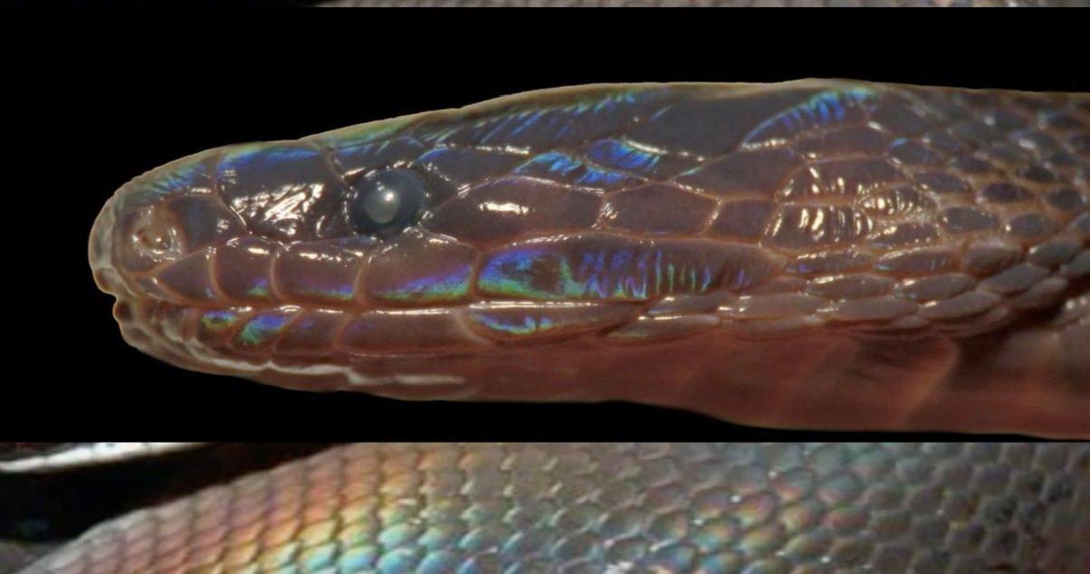 10 serpent.jpg?resize=412,232 - Une nouvelle espèce de serpent vient d'être découverte au Vietnam