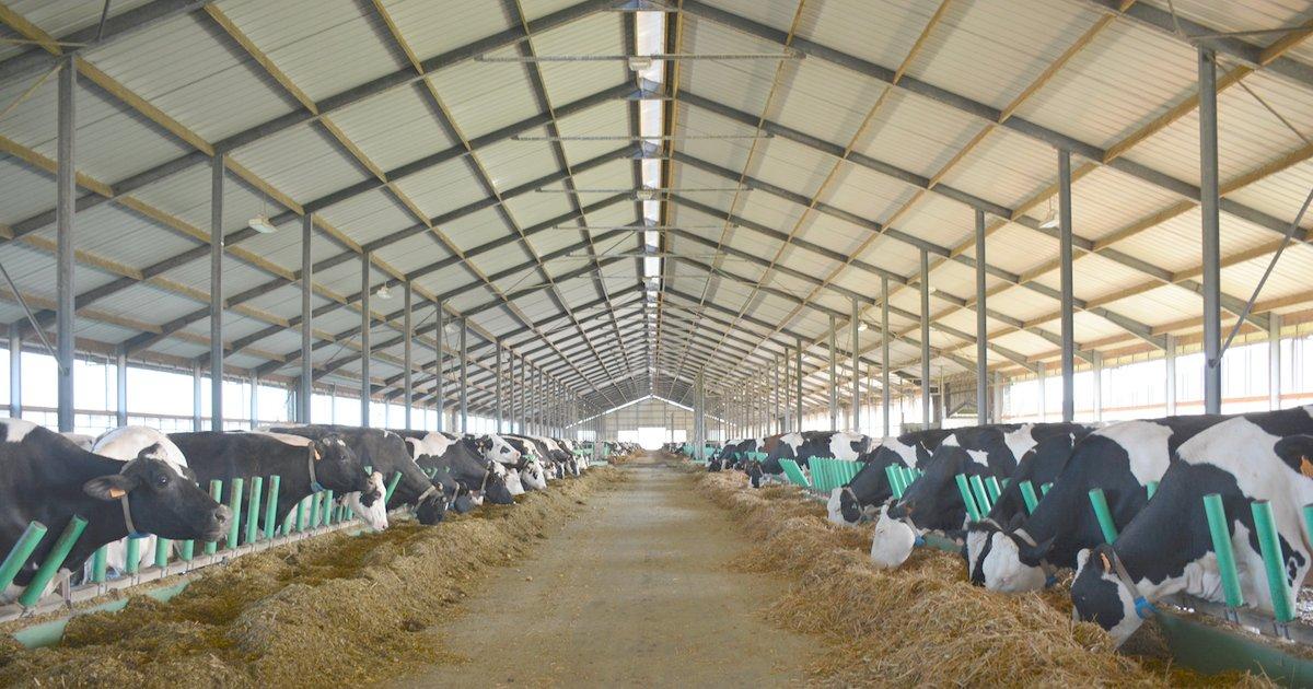 1000 vache.png?resize=412,232 - La ferme des 1000 vaches dans la Somme s'apprête à fermer ses portes