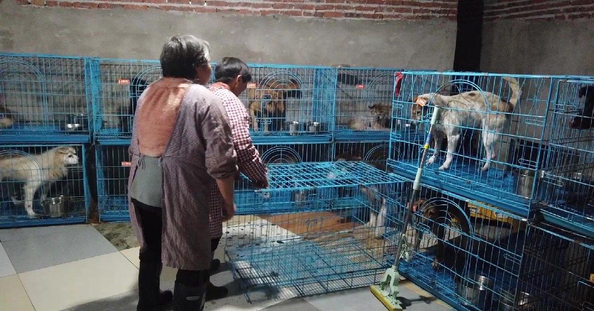 12 wen junhong.jpg?resize=412,232 - Une femme qui a consacré sa vie à la cause animale vit maintenant avec 1300 chiens