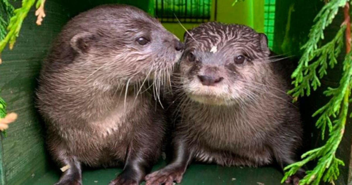 2 27.jpg?resize=412,232 - Two Lonely Otters Who Both Lost Their Partners Have Finally Moved In Together