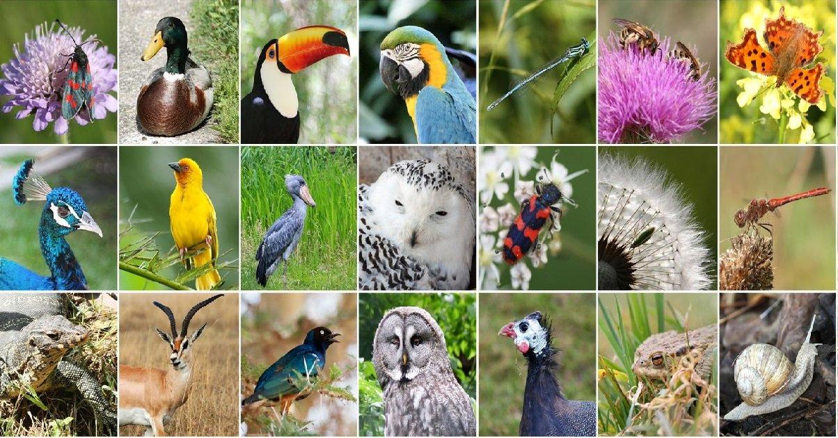 3 animaux.jpeg?resize=412,232 - Nature: quelles sont les espèces qui ont disparu en 2020 ?