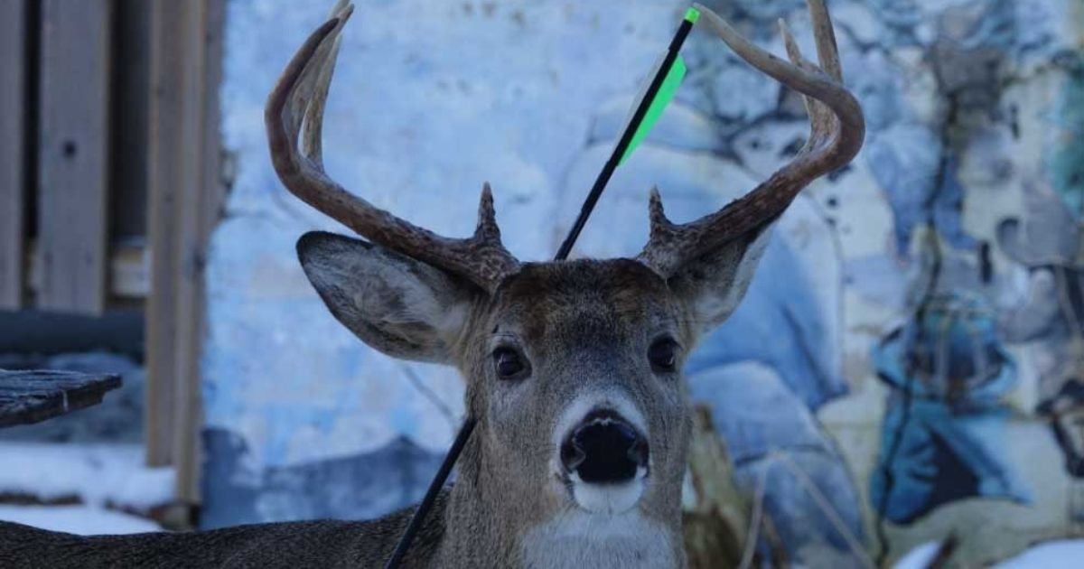 4 60.jpg?resize=1200,630 - Deer That Visits A Town In Canada Every Christmas Returns — With An Arrow Through Its Head