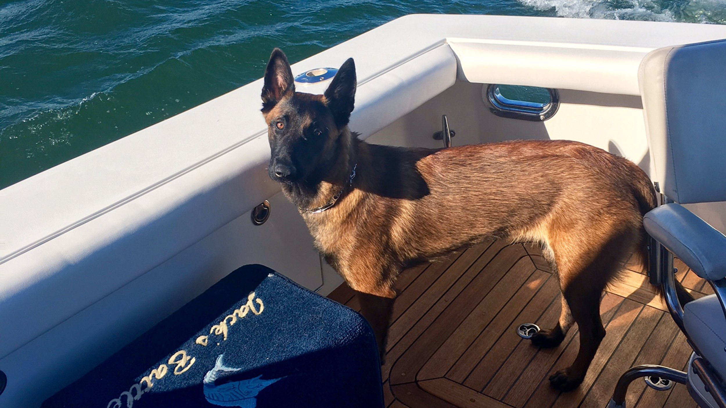 Missing dog reunited with family after tumbling overboard during boat trip