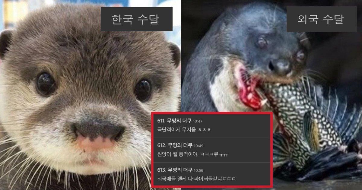 "41b3bfb2 ac4c 464f 9aa0 7cdb26f09bbc.jpeg?resize=412,232 - ""동물에 있어서도 국뽕이 차오르는데..?""라는 말 나오고 있는 한국동물과 외국동물들의 갭차이.jpg"