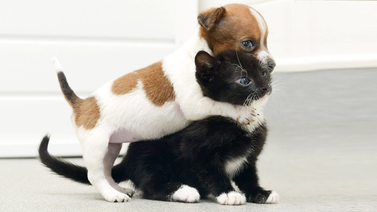 cat with puppies