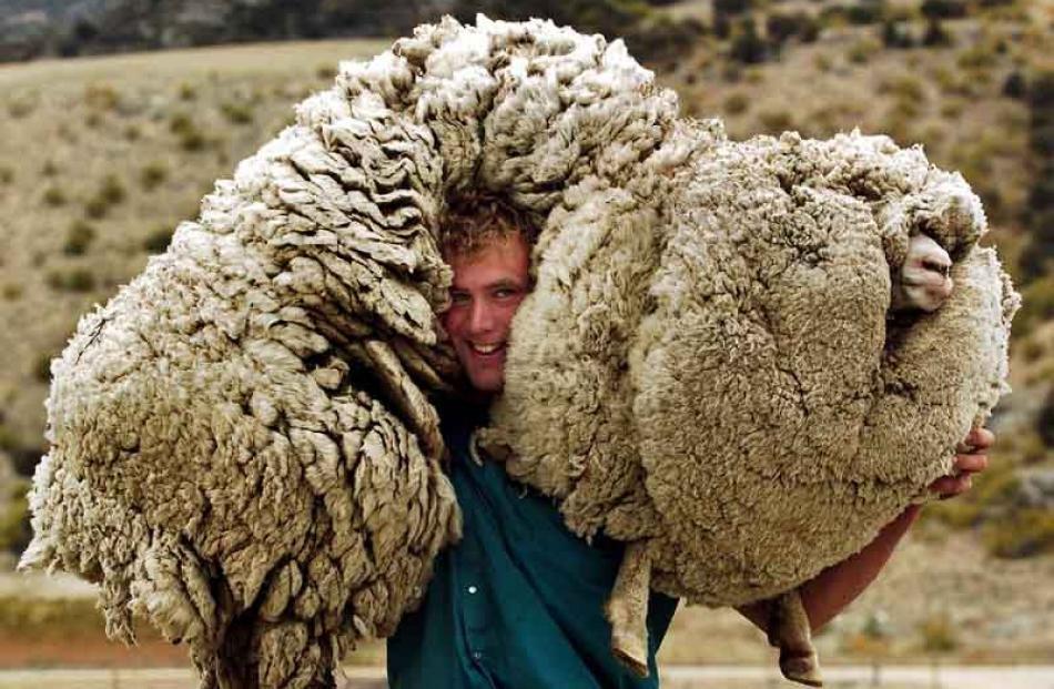 sheep shrek