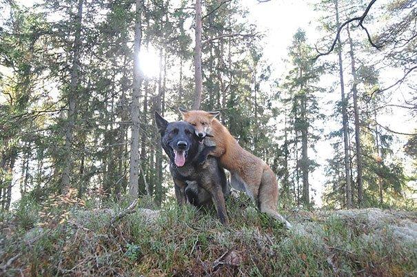 odd animal couples