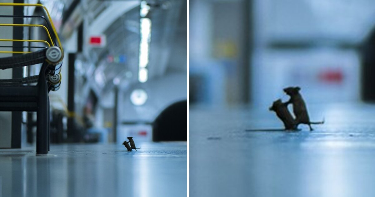 5 56.jpg?resize=1200,630 - 2020 야생동물 사진대회에 '생쥐'가 뽑힌 이유