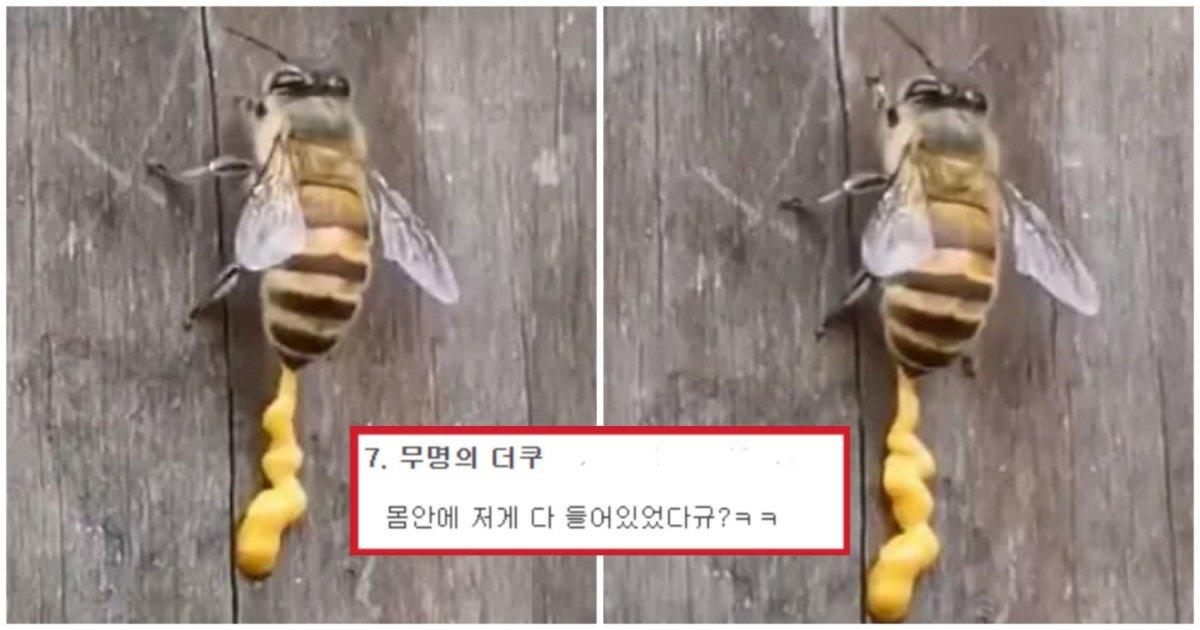 "6 13.jpg?resize=1200,630 - ""허니머스타드 제조 비법?""... 당신이 살면서 한 번도 본적 없을 꿀벌이 '응가'하는 모습(영상)"