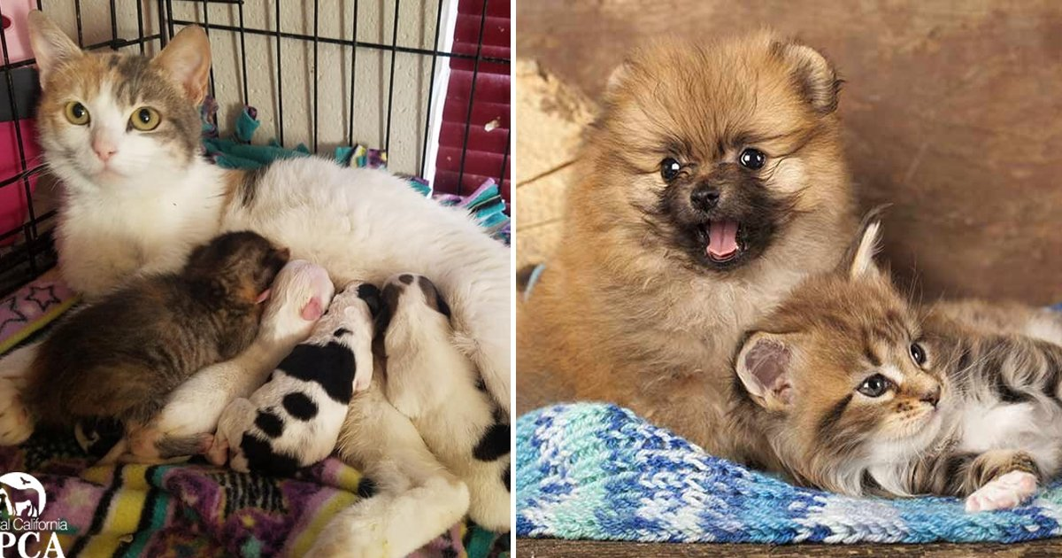 adgag 1.jpg?resize=412,232 - This Heartwarming Story Of Cat With Puppies Will Take Your Breath Away