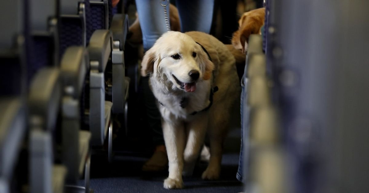 ap photojulio cortez file.jpg?resize=412,232 - A New Rule Cracks Down On Emotional Support Animals On Planes