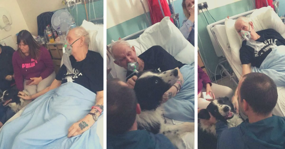 articulosportadas 3 6.png?resize=1200,630 - Abuelo Con Enfermedad Terminal Se Despide De Su Adorado Perro En El Hospital Antes De Fallecer