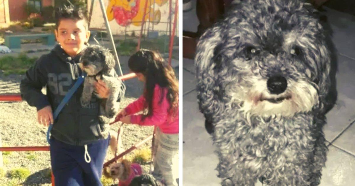 articulosportadas 4 10.png?resize=1200,630 - Pequeño Con Autismo Ofreció Su Bicicleta Como Recompensa Para Encontrar A Su Perro Desaparecido