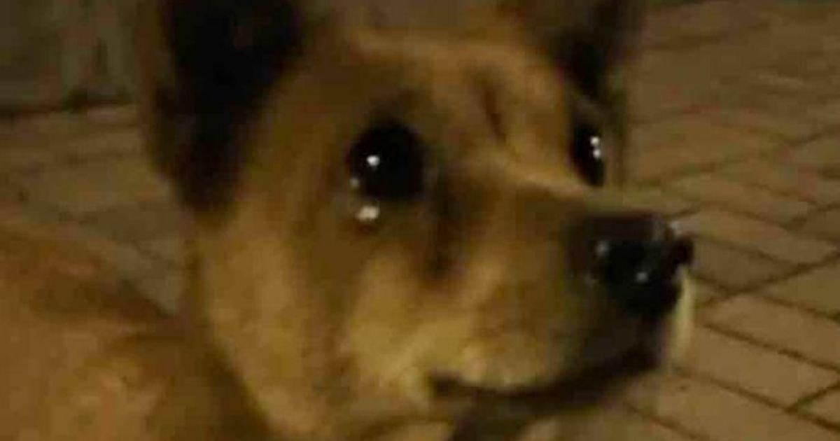 dog5 1.jpg?resize=1200,630 - Stray Dog Cries Tears Of Joy After Kind Stranger Gives It Some Food