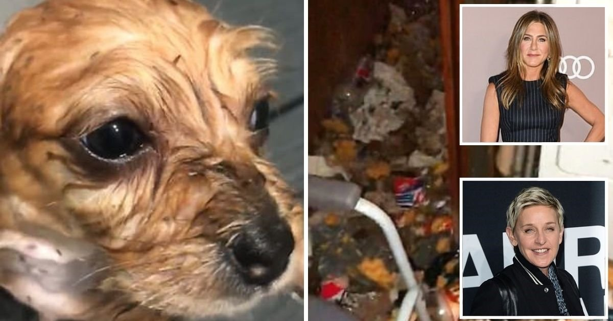 dogs.jpg?resize=412,232 - 100 Dogs Covered In Fleas And Living In A Hoarder's Filthy House Have Been Rescued