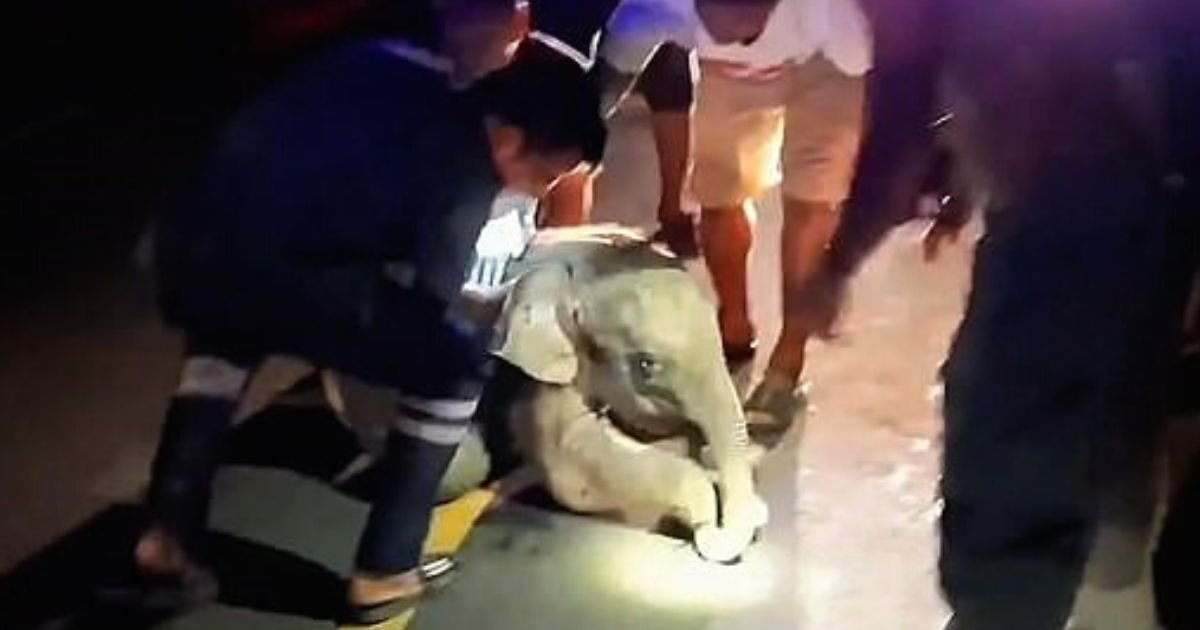 elephant5.jpg?resize=412,232 - One-Month-Old Elephant Cries In Pain After Motorcyclist Crashed Into It