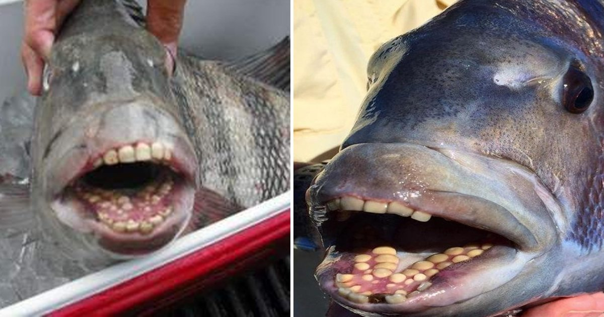 gggggggg.jpg?resize=1200,630 - These Fish With Human Teeth Are Freaking Out People By The Second