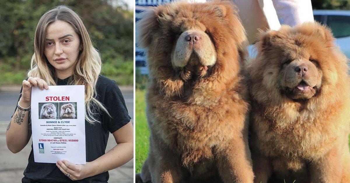 hsdfsdfsdfsf.jpg?resize=412,232 - Devastated Mum Offers £15K Reward After 'Ultra-Rare' Dogs Worth £25,000 Stolen