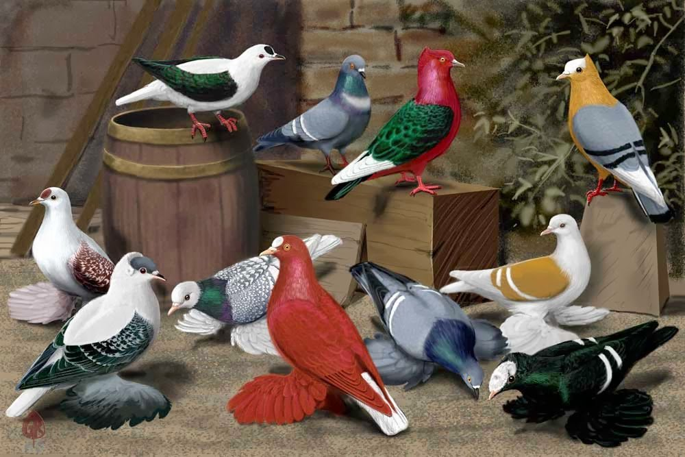 sitting pigeons