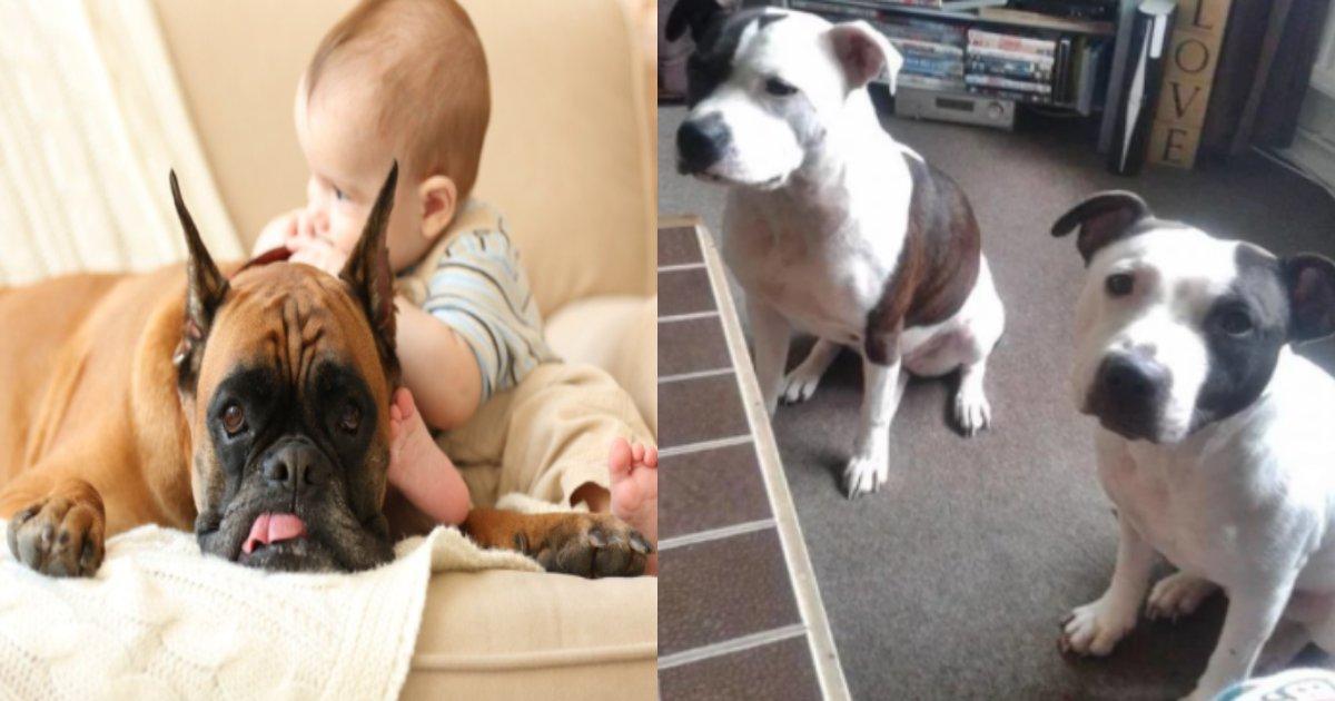 inu akatyan.png?resize=412,232 - 愛犬にかまれて凄惨に死んだ赤ん坊… 親に下された処罰が心外と非難の声