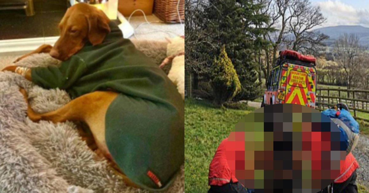 inu gake.png?resize=1200,630 - 45メートルの絶壁の下に墜落した犬が生き残った理由は映画のように奇跡的でした