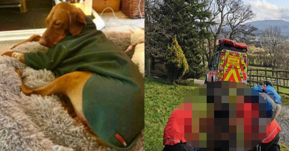 inu gake.png?resize=412,232 - 45メートルの絶壁の下に墜落した犬が生き残った理由は映画のように奇跡的でした