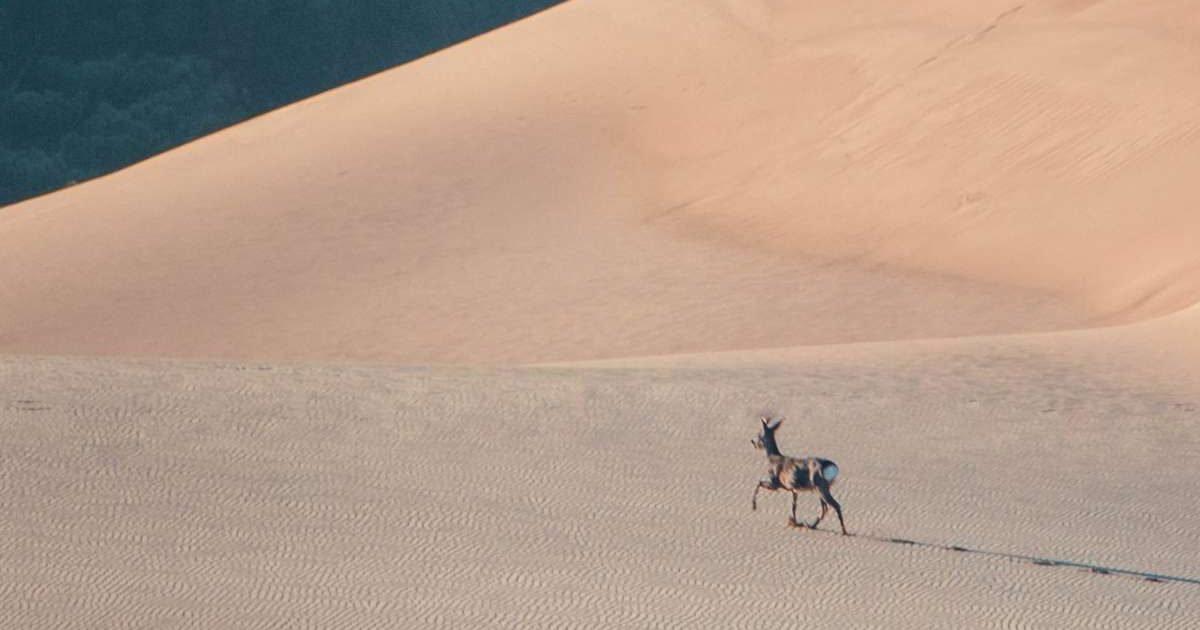 la photo est en ligne e1607094599302.jpg?resize=412,232 - La photo d'un chevreuil sur la Dune du Pilat devient virale