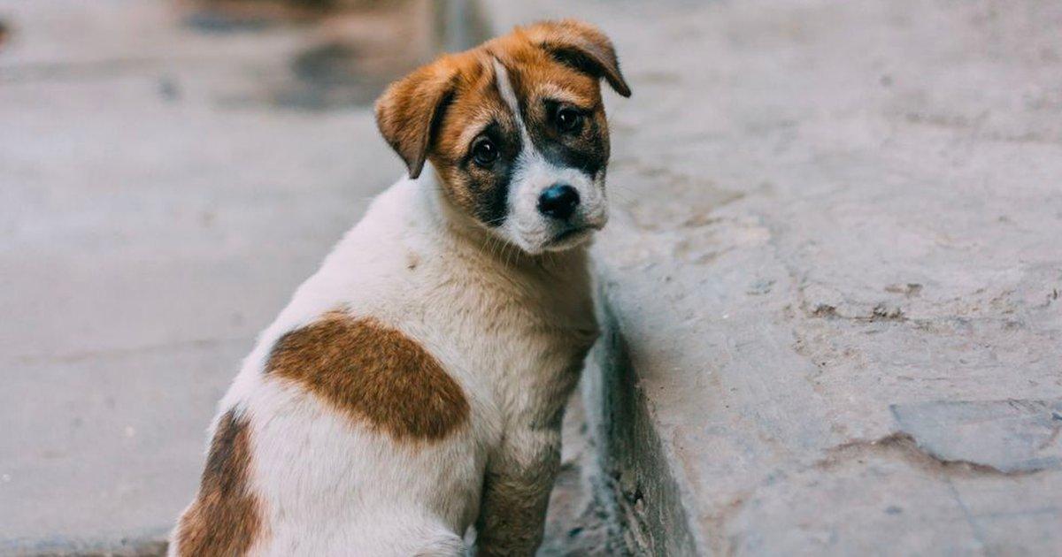 maltraitance animale.png?resize=412,232 - Vaucluse : un collectif de juristes traite les affaires de maltraitance animale
