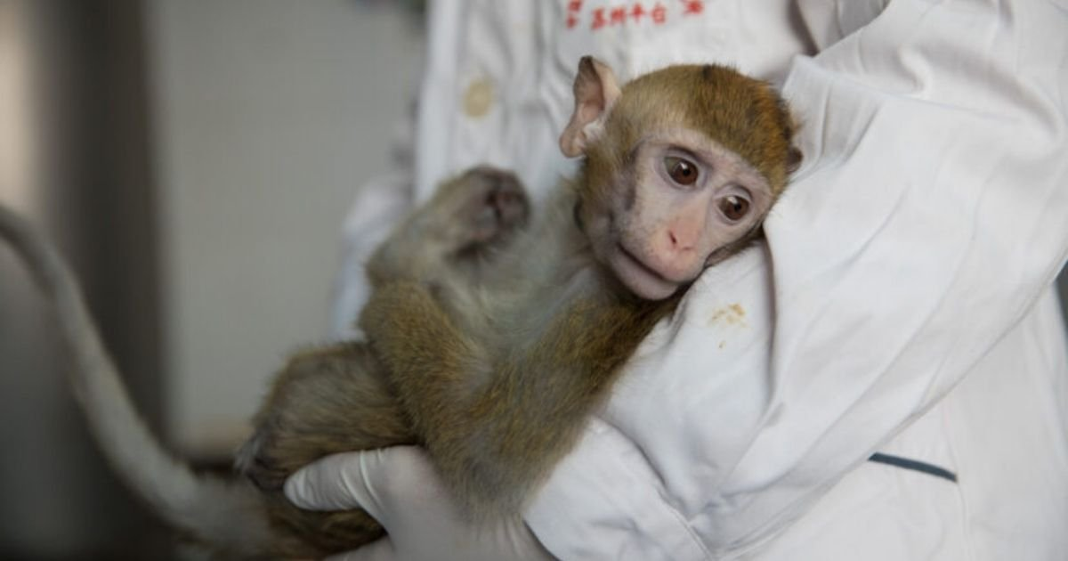 pa images3.jpg?resize=1200,630 - NASA Reportedly Killed All Monkeys Held At Research Centre In One Day