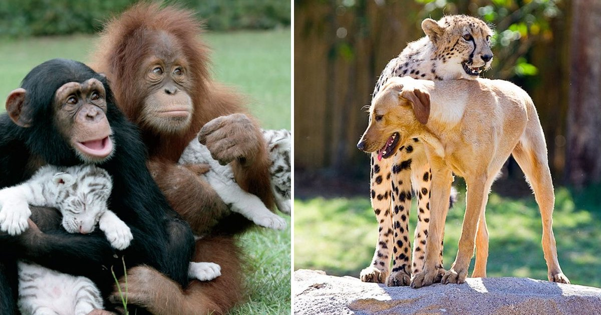 reegg.jpg?resize=412,232 - These Dynamic Clicks Of Odd Animal Couples Will Melt Your Heart