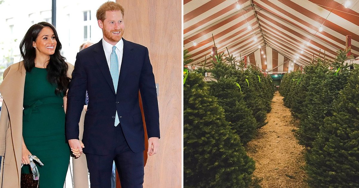 rrryry.jpg?resize=1200,630 - Bizarre Royal Encounter: Prince Harry Gets Mistaken As Christmas Tree Salesman
