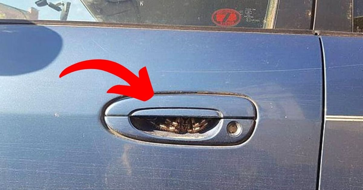spider4.jpg?resize=1200,630 - Woman 'Hasn't Driven For A Week' After Spotting Terrifying Creature Inside Car Door Handle