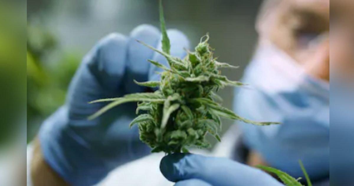 titulo 17.jpg?resize=1200,630 - La ONU Elimina El Cannabis De Una Lista De Las Sustancias Más Peligrosas