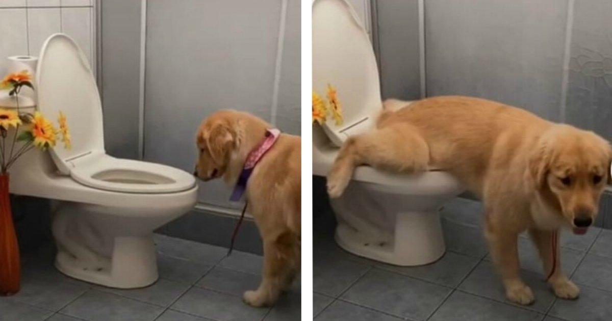titulo 2020 12 21t161545 514.png?resize=1200,630 - Cachorra Aprendió A Ir Al Baño Y Hacer Sus Necesidades Como Los Humanos
