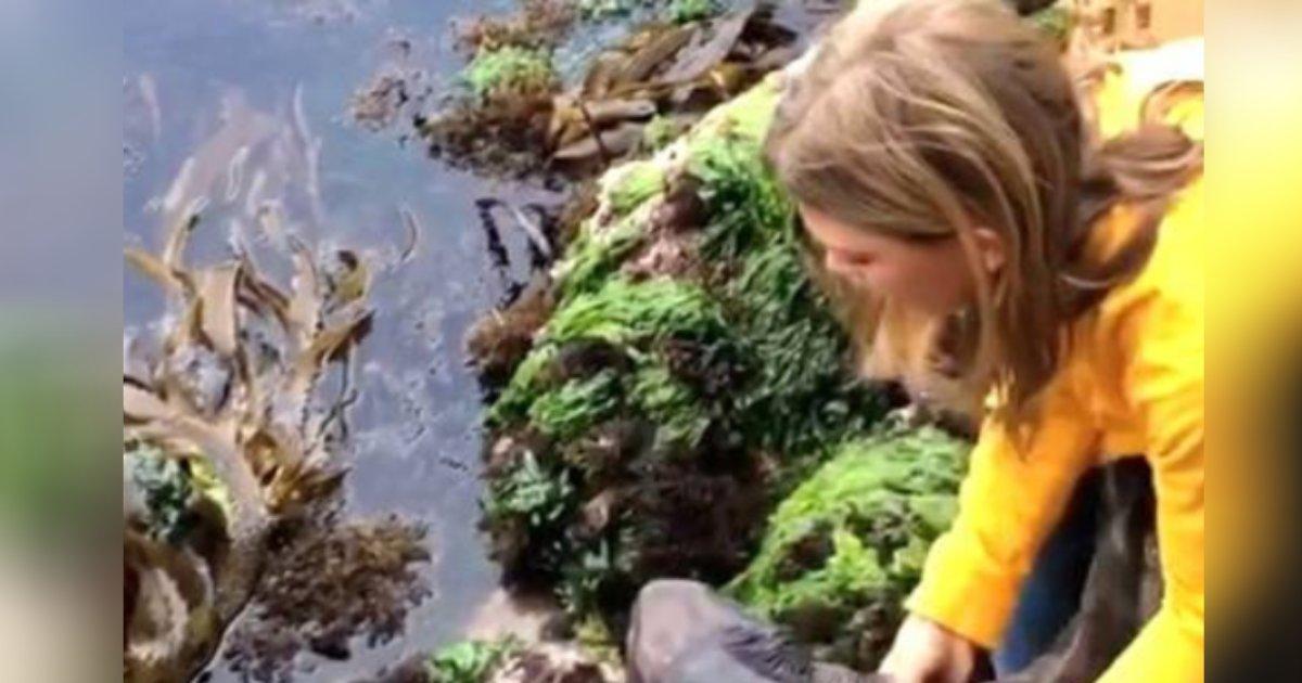 titulo 2020 12 29t154405 021.png?resize=1200,630 - Niña De 11 Años Sin Miedo Rescata A Un Tiburón Bebé
