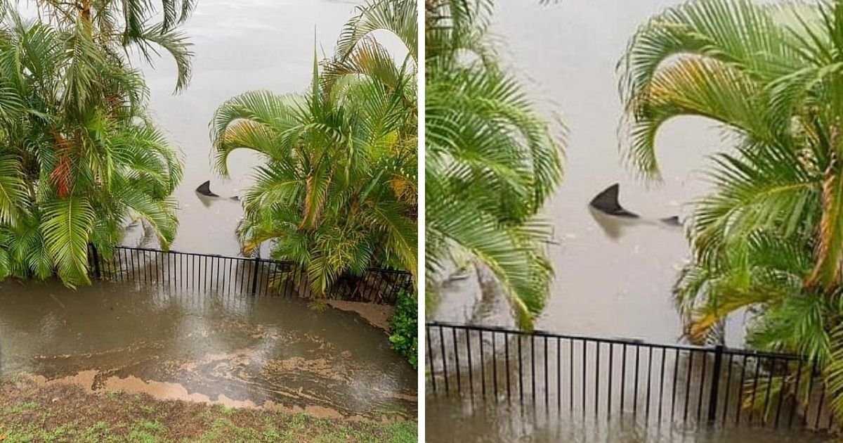 untitled design 6 6.jpg?resize=1200,630 - Shark Spotted Swimming Outside Man's Home After A Flood