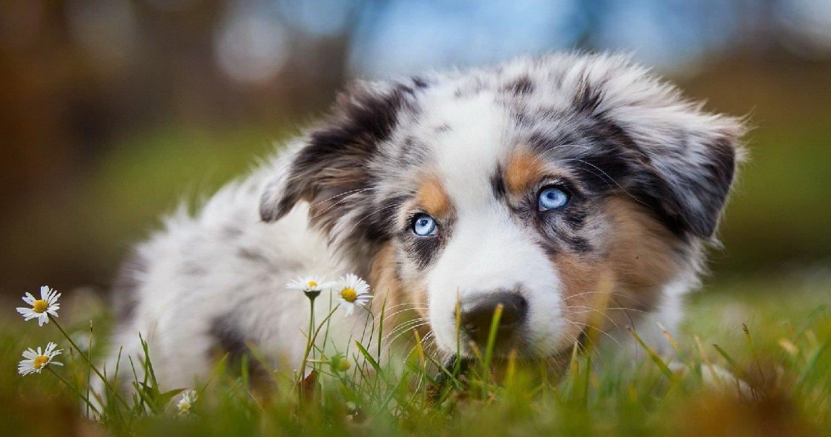 12 chienchien.jpg?resize=1200,630 - Un chien a mangé la jambe de son maître qui était décédé depuis deux semaines