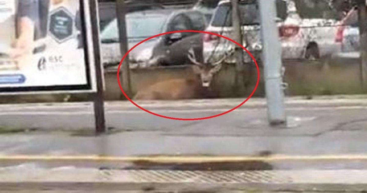 3 oise.jpg?resize=1200,630 - Oise: un cerf poursuivi par une chasse à courre a bloqué a ligne TER Paris-Creil