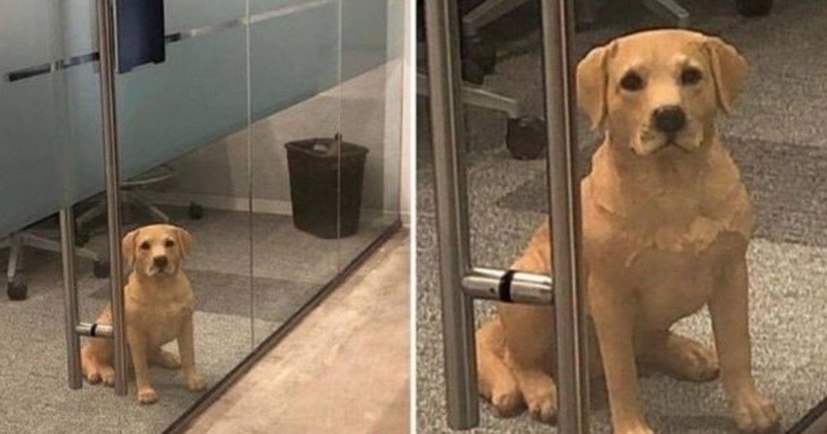 """4 26.jpg?resize=412,275 - """"누가 회사에 강아지를 놓고 갔는데 너무 화가 납니다"""""""