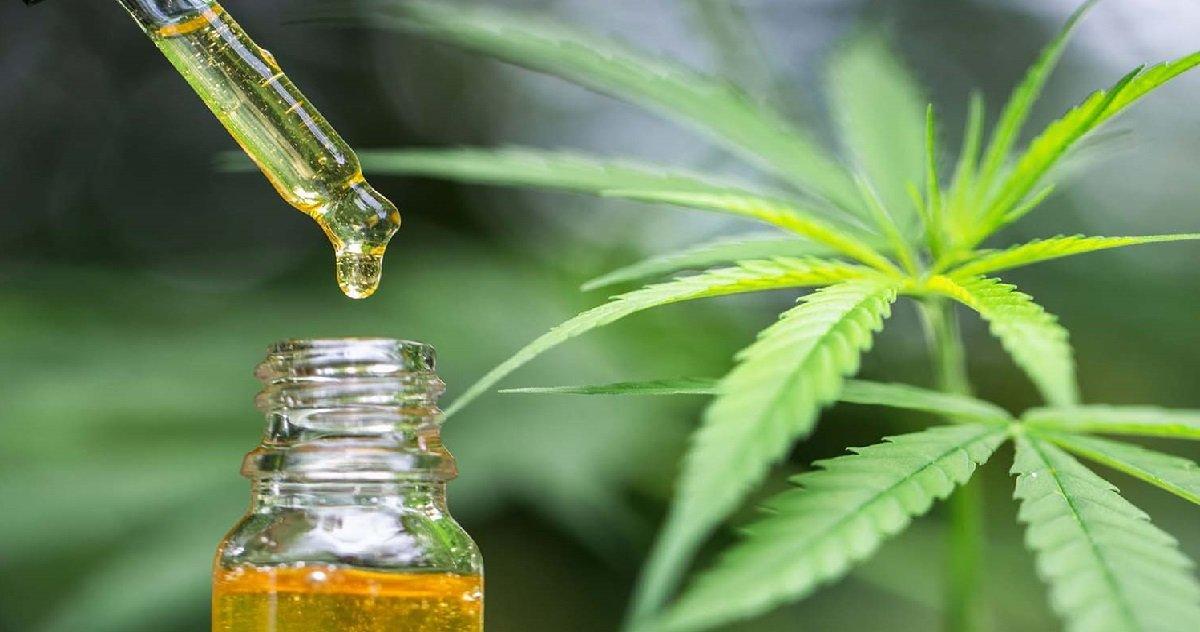 4 cbd.jpg?resize=412,232 - Cannabis: selon des chercheurs, le CBD tuerait les bactéries responsables d'infections