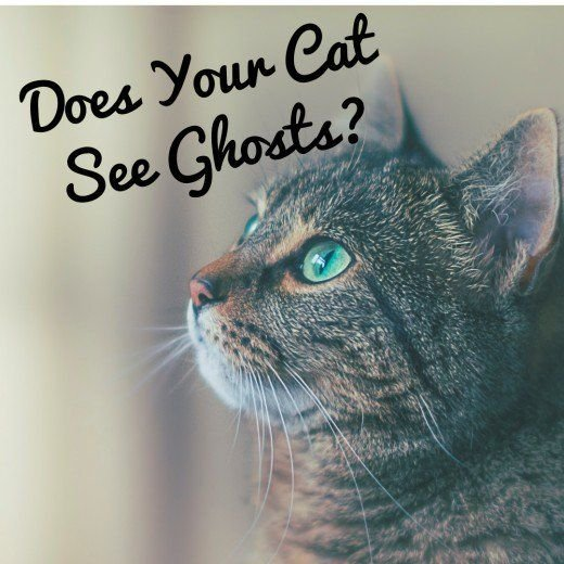cats see ghosts