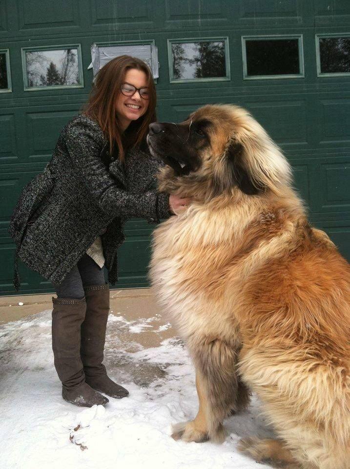 cutest big dogs
