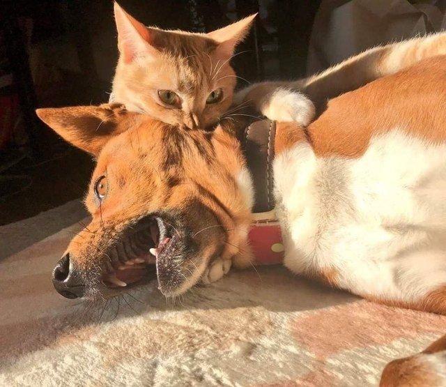 rudest animals