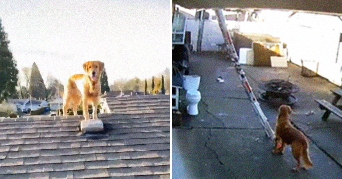 "7 26.jpg?resize=412,232 - ""강아지가 사다리를?""... 어떻게 옥상에 있는지 너무 궁금해 CCTV 단 남자 (영상)"