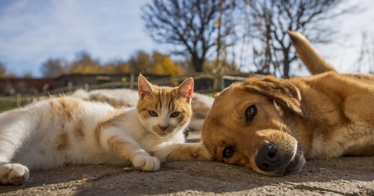 7 cc.jpg?resize=1200,630 - Selon des experts scientifiques, les chiens et les chats devraient aussi être vaccinés