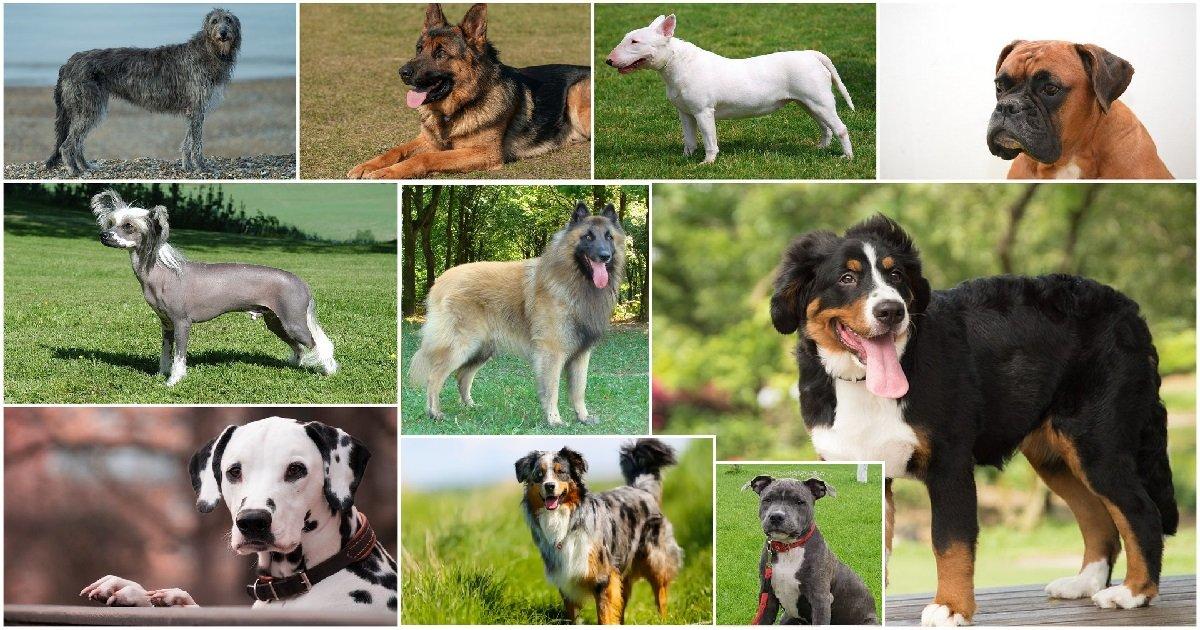 7 chiens.jpg?resize=412,232 - Animaux: quel est le classement des chiens préférés des Français ?