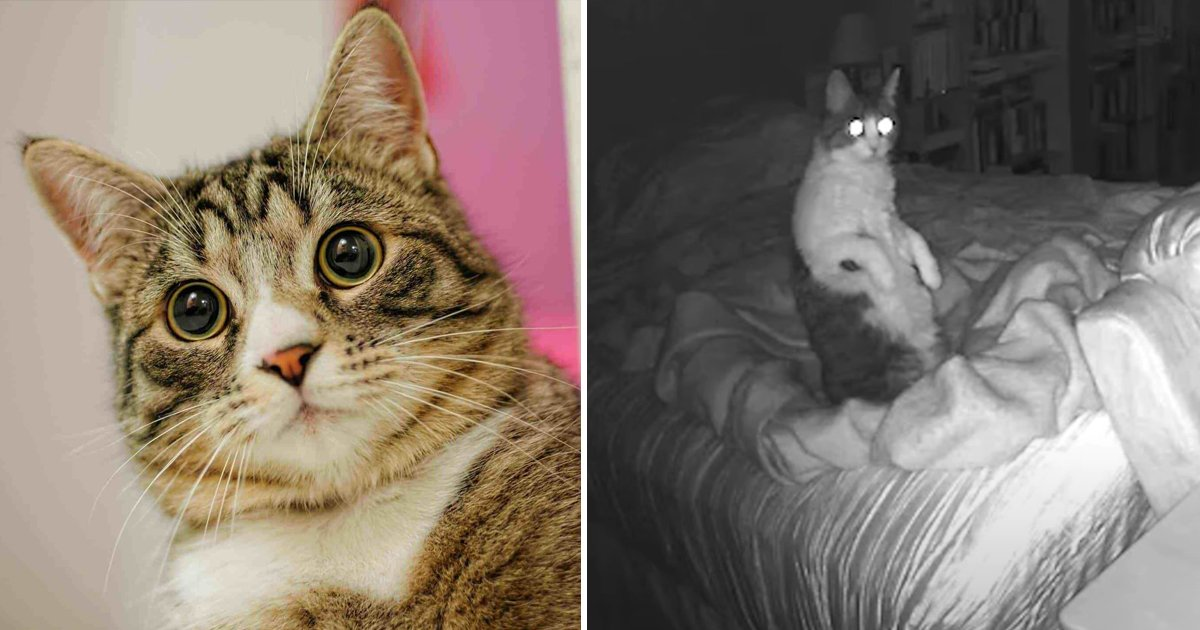 agagag 1.jpg?resize=412,232 - Can Cats See Ghosts | The Answer To The Age Old Myth Might Surprise You